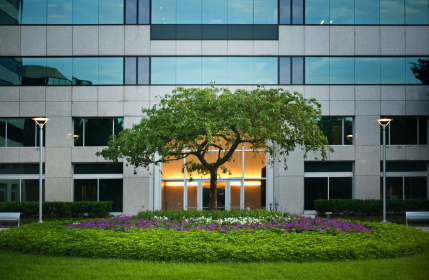 stock-photo-9541378-tree-outside-office-building