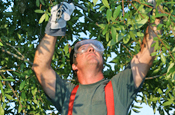commercial-pruning